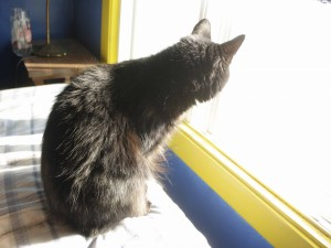 Gato mirando por una ventana