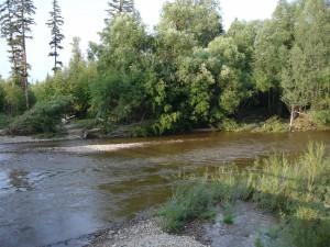 Árboles junto al cauce del río