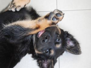 Un perro juguetón