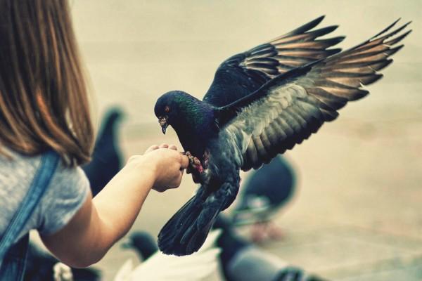Niña alimentando a una paloma