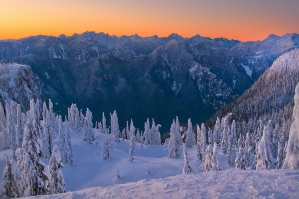 Montañas y pinos cubiertos de nieve al amanecer