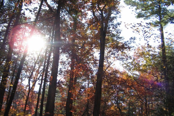 Rayos de sol a través de las ramas de los árboles