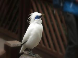 Postal: Un esbelto pájaro con plumas blancas