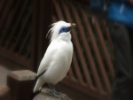 Un esbelto pájaro con plumas blancas