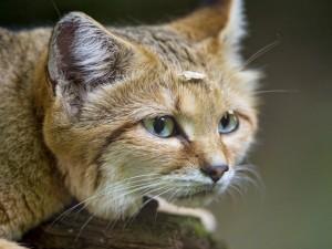 Un bonito gato con virutas de madera en la cabeza