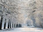 Paisaje cubierto de nieve
