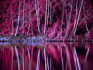 Los árboles en otoño se reflejan en un lago