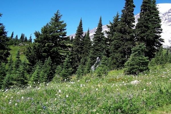 Flores silvestres junto a unos pinos
