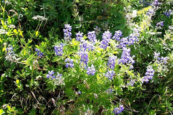 Esplendorosas flores silvestres color lila