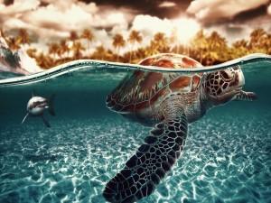 Tiburón persiguiendo a una tortuga