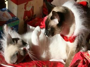 Postal: Gatos jugando