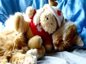 Postal: Gatito durmiendo con un osito de peluche