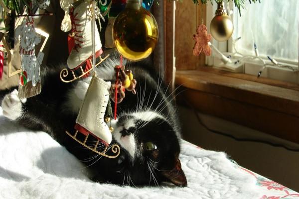 Gato negro jugando con los adornos del árbol de Navidad
