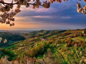 Espléndido valle en primavera
