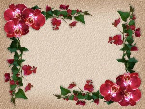 Buganvilla y orquídeas rojas formando un marco