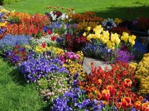 Un bello jardín con tulipanes y pensamientos