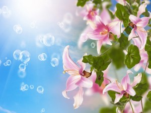 Burbujas y espléndidos lilium rosas
