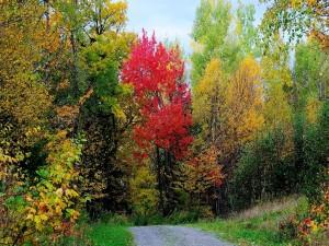 Camino hacia el bosque en otoño