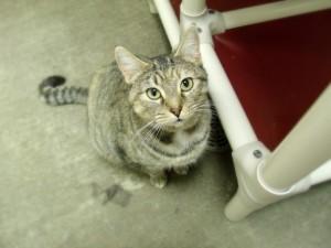 Postal: Un gato mirando desde el suelo