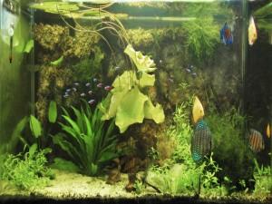 Un cuidado acuario con peces y plantas