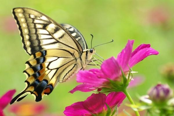 Una mariposa posada en una flor de color fucsia