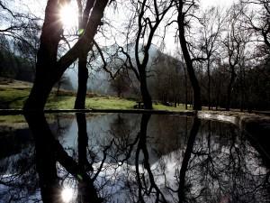 Árboles reflejados en el lago del bosque