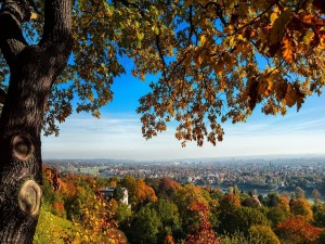 Árboles otoñales a las afueras de una ciudad