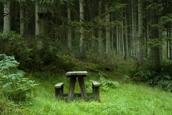 Lugar de descanso en el bosque