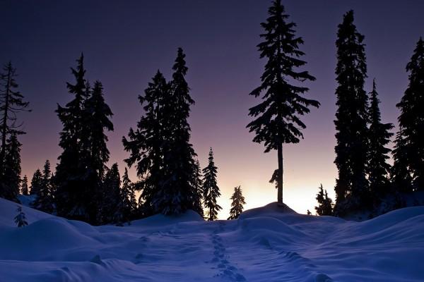 Huellas en la nieve al amanecer