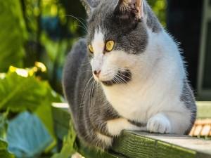 Gato con ojos amarillos
