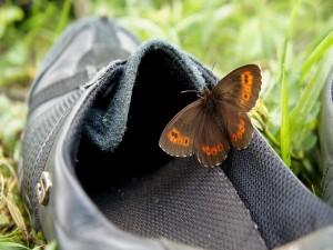 Postal: Mariposa sobre un zapato