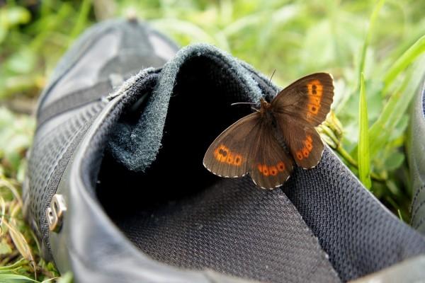 Mariposa sobre un zapato