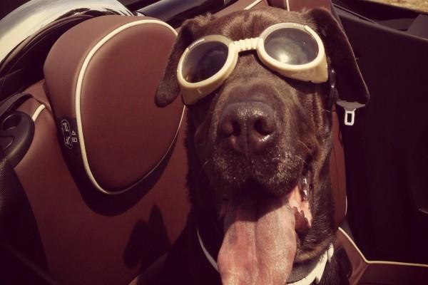 Simpático perro con unas gafas de piscina
