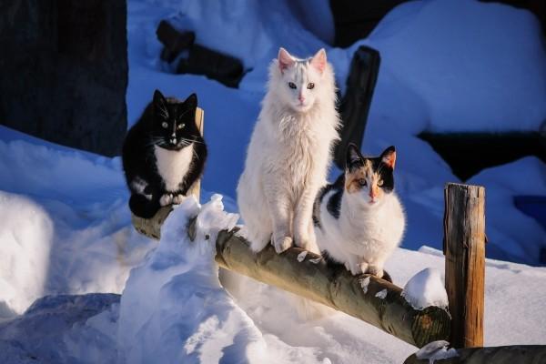 Gatos sobre un tronco con nieve