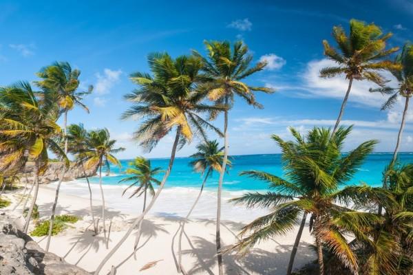Bellas palmeras en una playa