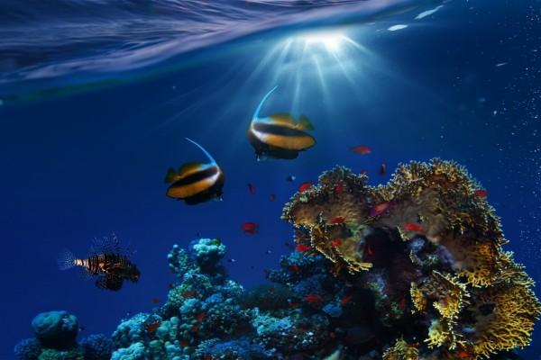 Corales y peces bajo el agua