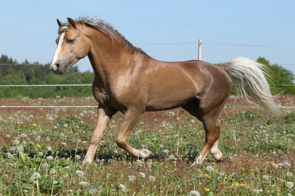 Hermoso caballo sobre la hierba