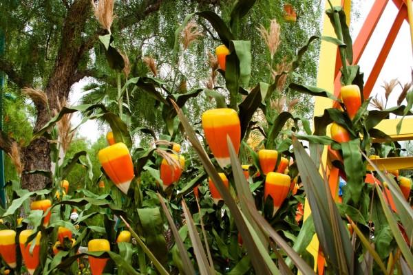 Caramelos de maíz en un jardín