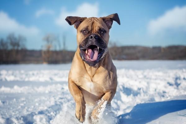 Perro corriendo en la nieve