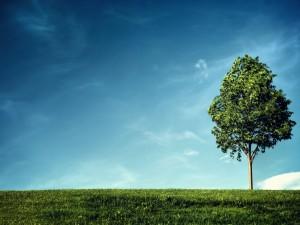 Las hojas de un árbol meciéndose con el viento