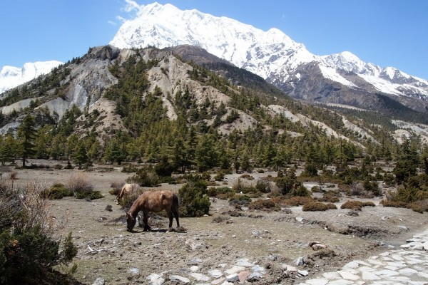 Burros pastando junto a las montañas