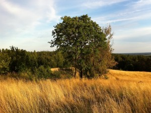 Postal: Árboles en el campo