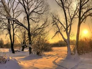 Un blanco amanecer