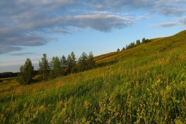 Árboles y hierbas en el campo