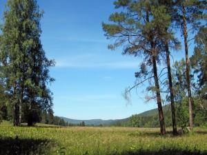 Postal: Árboles en un campo verde