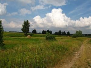 Postal: Camino junto al campo
