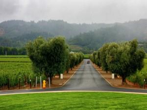 Carretera entre árboles y viñedos