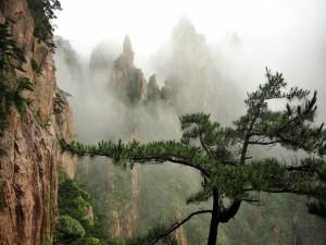 Niebla entre rocas y árboles