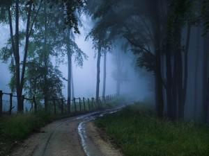 Camino cubierto por la niebla