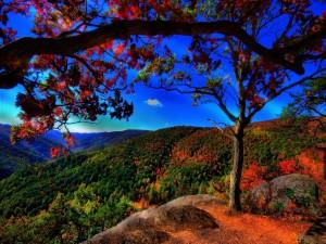 Postal: Árboles a la llegada del otoño